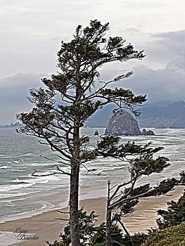 Lynn Bawden - Oregon Coastline