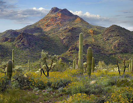 Organ Pipe Cactus National Monument in Arizona by Tim Fitzharris