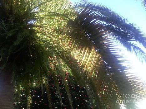 Orlando Florida 14 Dt by Vale Tek