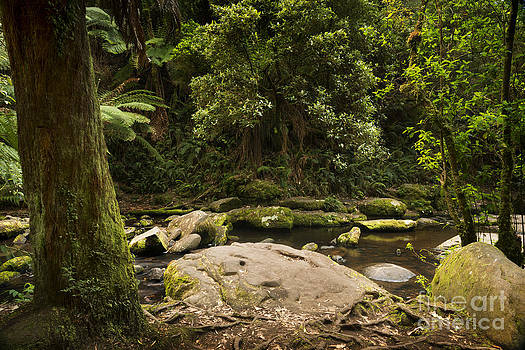 Tim Hester - Otways National Park