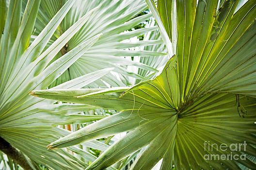 Tim Hester - Palm Leaf Background