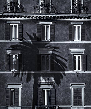 David Pringle - Palm Tree