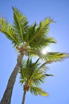 Palm Tree by Jose Mena