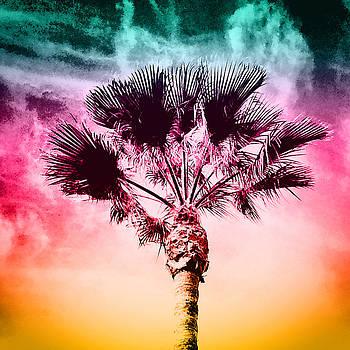 Palm Tree Sky by Barry Shereshevsky