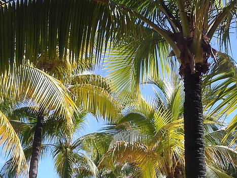 Palm Trees by Lisa Lamir