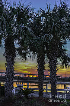 Dale Powell - Palmetto Sunset