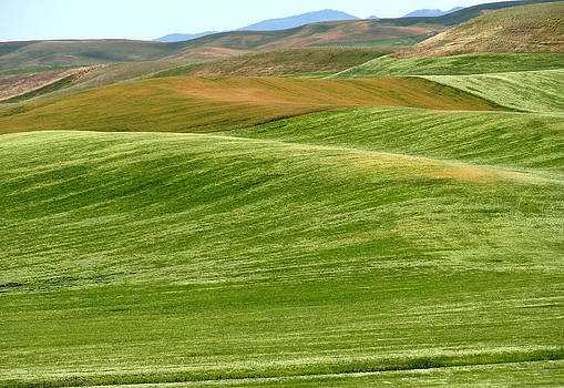 Palouse Patchwork 6 by Anne Mott