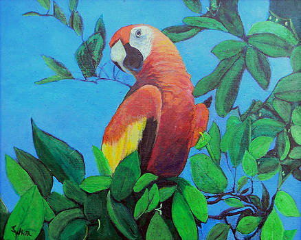 Parrot in the Tree by Judie White