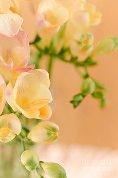 Pastel Dreams by Mary  Smyth
