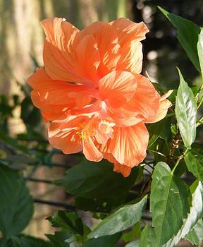 Peach Beauty by Bernadette Amedee