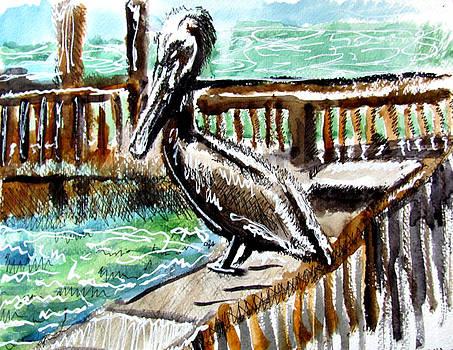 Pelican by Douglas Durand