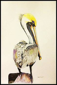 Pelican by Sonali Sengupta