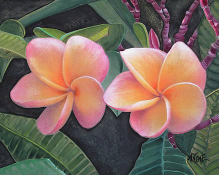 Angie Hamlin - Pink Plumeria