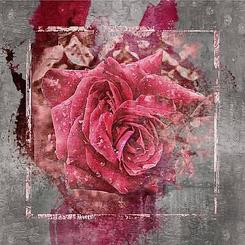 Pink Rose by Angel Eowyn
