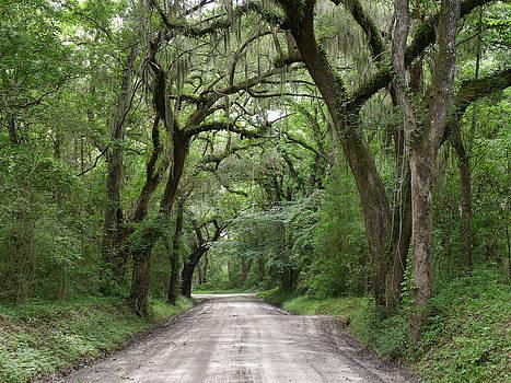 Gazie Nagle - Plantation Road II