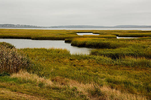 Plum Island Marshes in Autumn 1 by Nancy De Flon