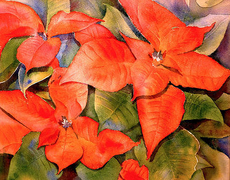Poinsettia by Thomas Habermann