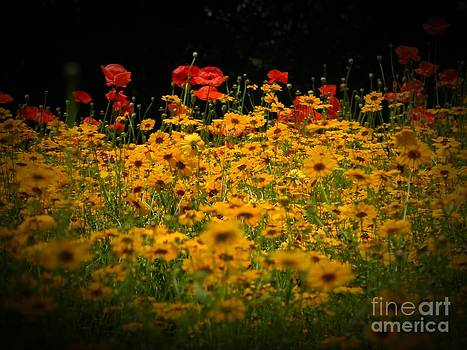 Poppies by Leslie Revels