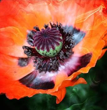 Poppy by Cathie Tyler
