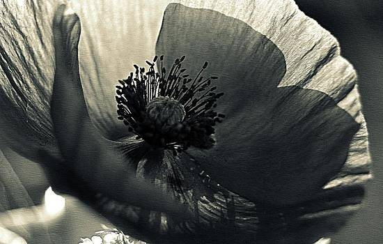Marysue Ryan - POPPY