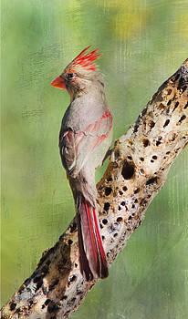 Barbara Manis - Pretty Bird