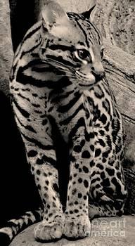 Pretty Cat by Kathleen Struckle