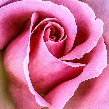Pretty in Pink by CarolLMiller Photography