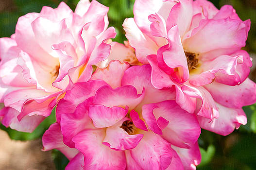 Pretty Pink Roses by Bobbi Feasel