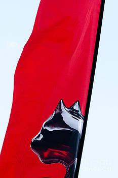 Puma sail - Volvo Ocean Race by Georgina Noronha