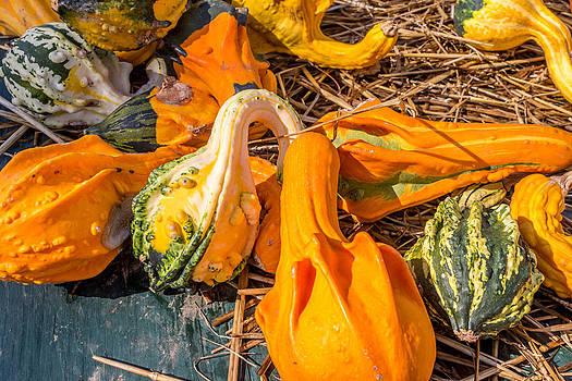 Pumpkin by Samir Chokshi