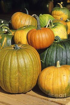 Pumpkins by Derek Croucher