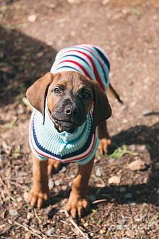 Puppy In Winter Coat by Gillian Vann