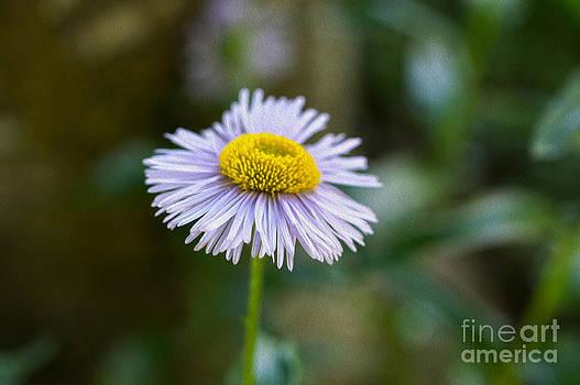 Purple Flower by Nur Roy