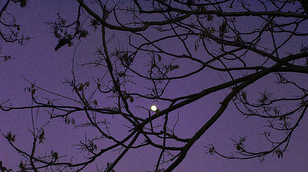 Purple Moon by Sally Stevens