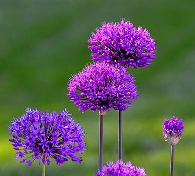 Purple Passion by Billie sue  Crownover