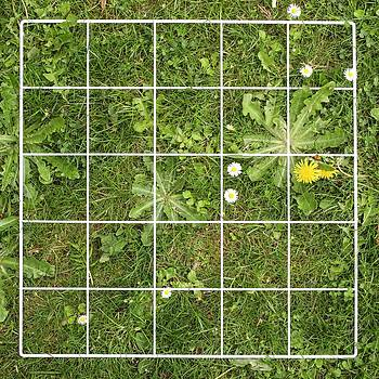 Quadrat On A Lawn With Weeds by Science Photo Library