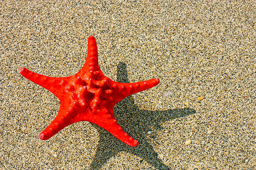 Red starfish by Borislav Marinic