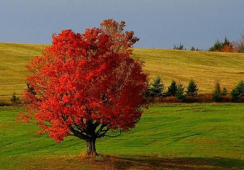 Red Tree by June Lambertson