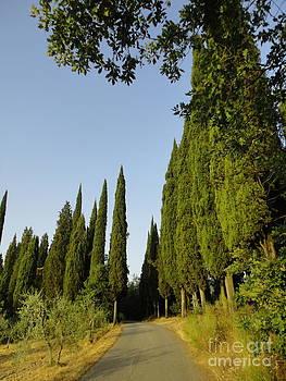 Alessandra Di Noto - Road in Loppiano