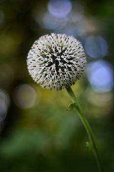 Gynt   - Round flower