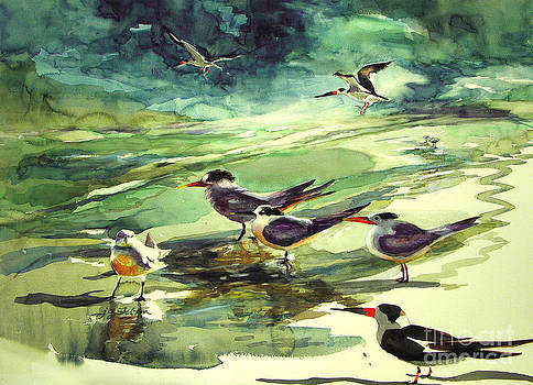 Royal Terns and Black Skimmers by Julianne Felton