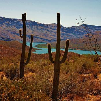 Saguaros in Arizona by Dany Lison