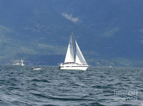 Sail boat  by Larry Stolle