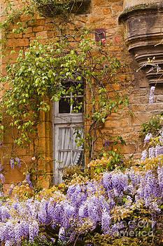 Sarlat wisteria by Julian Elliott