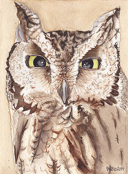 Screech Owl by Heather Stinnett