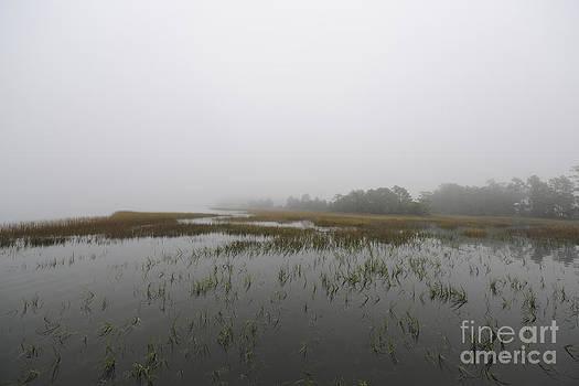Dale Powell - Sea Fog