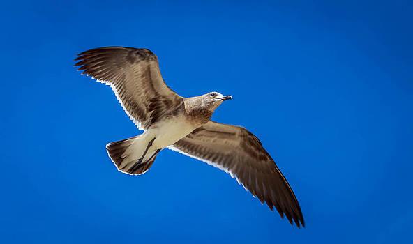 Seagull by Samir Chokshi