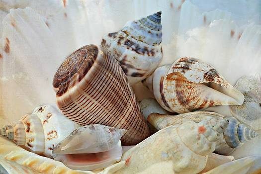 Seashell Delight by Shirley Sirois