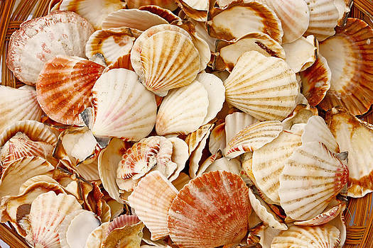 Seashells by Borislav Marinic