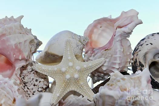 Sophie Vigneault - Seashells